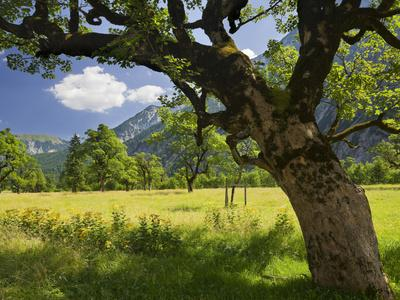 https://imgc.allpostersimages.com/img/posters/austria-tyrol-karwendel-mountain-range-gro-er-ahornboden-area-maple-trees_u-L-Q11YR550.jpg?p=0