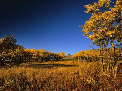 https://imgc.allpostersimages.com/img/posters/autumn-aspen-grove-in-two-dog-flats-in-glacier-national-park-montana-usa_u-L-P9N7S70.jpg?p=0