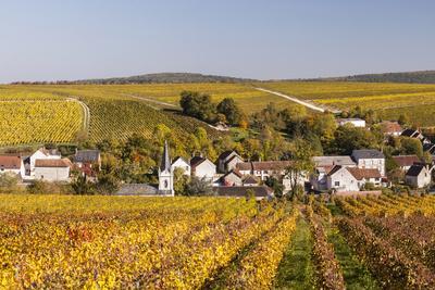 https://imgc.allpostersimages.com/img/posters/autumn-color-in-the-vineyards-surrounding-bue-sancerre-cher-centre-france-europe_u-L-Q12SELQ0.jpg?p=0