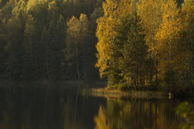 https://imgc.allpostersimages.com/img/posters/autumn-color-reflections-on-the-lake-surface_u-L-Q1EXXAG0.jpg?artPerspective=n