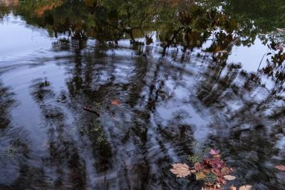 https://imgc.allpostersimages.com/img/posters/autumn-colored-leaves-in-pool-of-ripples_u-L-Q1CQPV50.jpg?artPerspective=n