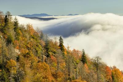https://imgc.allpostersimages.com/img/posters/autumn-colors-and-mist-at-sunrise-north-carolina_u-L-Q13C81R0.jpg?p=0