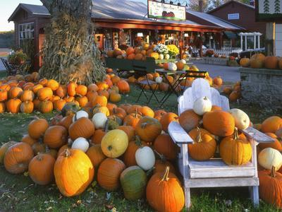 https://imgc.allpostersimages.com/img/posters/autumn-display-of-pumpkins-new-england-maine-usa_u-L-PN70RZ0.jpg?p=0