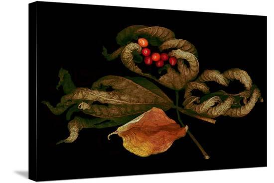 Autumn fall scanograph--Stretched Canvas