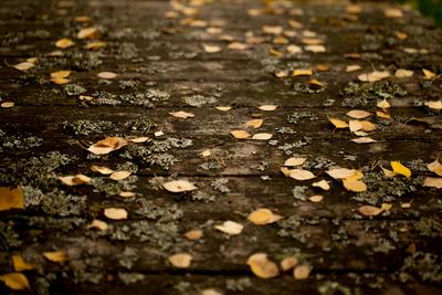 https://imgc.allpostersimages.com/img/posters/autumn-fallen-leaves-on-the-bridge_u-L-Q1EXRTP0.jpg?artPerspective=n