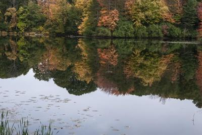 https://imgc.allpostersimages.com/img/posters/autumn-foliage-in-forest-by-lake_u-L-Q1CQPXZ0.jpg?artPerspective=n