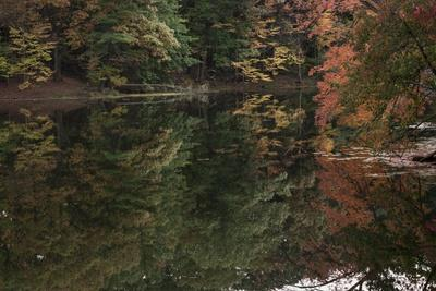 https://imgc.allpostersimages.com/img/posters/autumn-foliage-with-water-like-glass_u-L-Q1CQQ7Z0.jpg?artPerspective=n