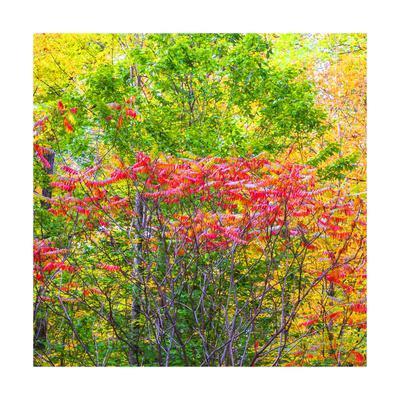 https://imgc.allpostersimages.com/img/posters/autumn-i-trees-square_u-L-Q1CAAB80.jpg?artPerspective=n