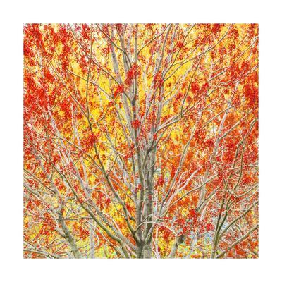 https://imgc.allpostersimages.com/img/posters/autumn-ii-square_u-L-Q1CACDK0.jpg?artPerspective=n