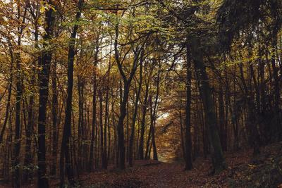 https://imgc.allpostersimages.com/img/posters/autumn-in-the-teutoburg-forest_u-L-Q1EXMO10.jpg?artPerspective=n
