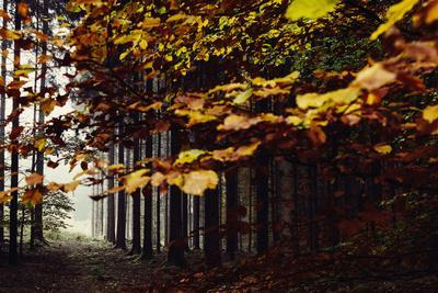 https://imgc.allpostersimages.com/img/posters/autumn-in-the-teutoburg-forest_u-L-Q1EXNQX0.jpg?artPerspective=n
