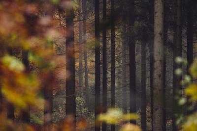 https://imgc.allpostersimages.com/img/posters/autumn-in-the-teutoburg-forest_u-L-Q1EXO3W0.jpg?artPerspective=n