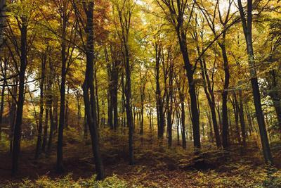 https://imgc.allpostersimages.com/img/posters/autumn-in-the-teutoburg-forest_u-L-Q1EXOLW0.jpg?artPerspective=n