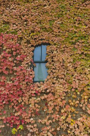 https://imgc.allpostersimages.com/img/posters/autumn-ivy-fargo-north-dakota-usa_u-L-PN6O920.jpg?artPerspective=n