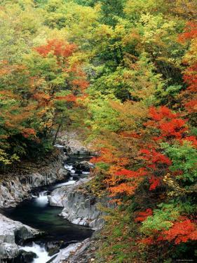 Autumn Leaves, Nakatsugawa, Fukushima, Japan