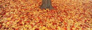 Autumn Leaves near a Tree Trunk, Grand Rapids, Michigan, USA