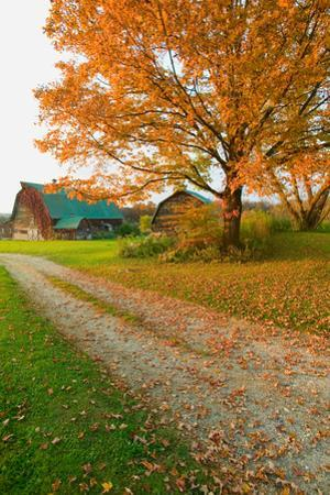 Autumn leaves, red barn and dirt path in Litchfield Hills of Connecticut