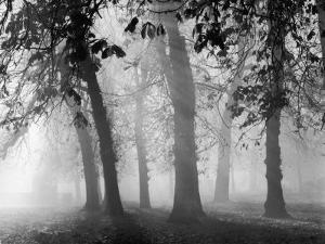 Autumn Mists a Scene Among the Trees in Abingdon Park Northampton Northamptonshire England