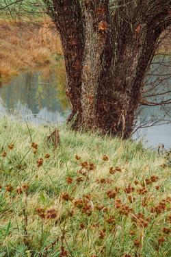 Autumn Pond Detail, Calistoga Napa Valley