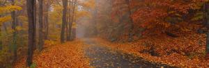 Autumn Road, Monadnock Mountain, New Hampshire, USA