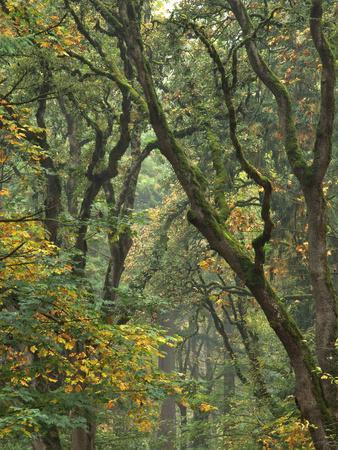 https://imgc.allpostersimages.com/img/posters/autumn-scenic-of-forest-trees-champoeg-state-park-oregon-usa_u-L-PN6S1M0.jpg?p=0
