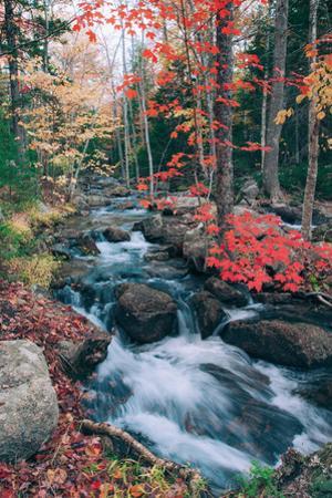 Autumn Stream Revisited, Acadia Maine Coast