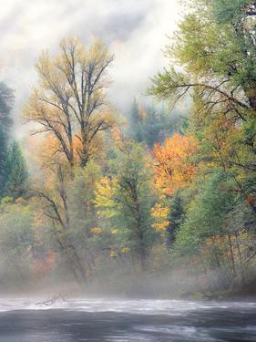 Autumn trees along Mackenzie River, Willamette National Forest, Linn County, Oregon, USA