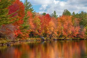 Autumn trees at riverbank, Oswegatchie River, Adirondack Mountains State Park, New York State, USA