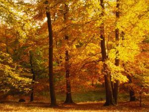 Autumn Trees Cumbria England