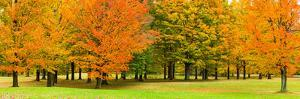 Autumn trees in a park, Chestnut Ridge County Park, Orchard Park, Erie County, New York State, USA