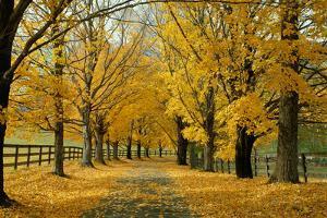 Autumn Trees near Waynesboro Virginia USA