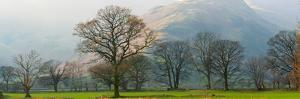 Autumn Trees with Mountain in the Background, Langdale, Lake District National Park, Cumbria