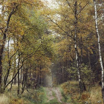 https://imgc.allpostersimages.com/img/posters/autumnal-teutoburg-forest_u-L-Q1EXMWV0.jpg?artPerspective=n