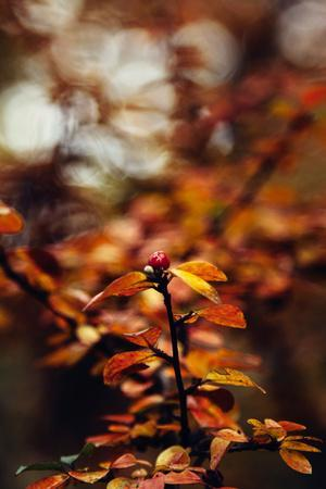 https://imgc.allpostersimages.com/img/posters/autumnal-teutoburg-forest_u-L-Q1EXOOZ0.jpg?artPerspective=n