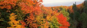 Autumnal Trees in a Forest, Hiawatha National Forest, Upper Peninsula, Michigan, USA