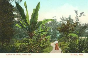 Avenue of Palms, Como Park, St. Paul, Minnesota