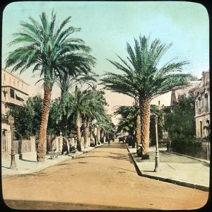 Avenue of Palms, Hyeres, France, Late 19th or Early 20th Century