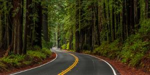 Avenue of the Giants passing through a redwood forest, Humboldt Redwoods State Park, California...