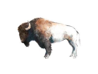 Colorful Bison Dark Brown