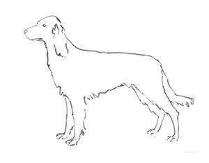 Ink Dog II by Avery Tillmon