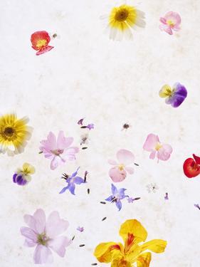 Blossoms, Bright, Different, Still Life by Axel Killian