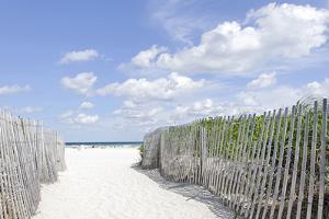 Beach Path, Lummus Park, Miami South Beach, Art Deco District, Florida, Usa by Axel Schmies