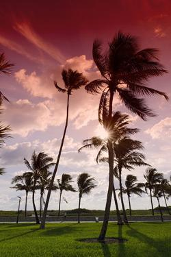 Palms in the Backlight in the Early Morning, Lummus Park, Miami South Beach by Axel Schmies