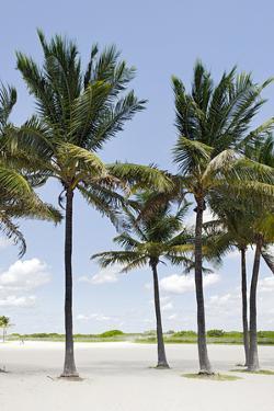 Palms in the Lummus Park, Ocean Terrace, South Miami Beach, Art Deco District, Florida, Usa by Axel Schmies