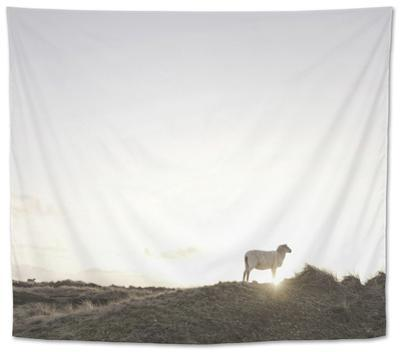 Sheep on Dune, the Sun, Back Light, List, Island Sylt, Schleswig Holstein, Germany by Axel Schmies