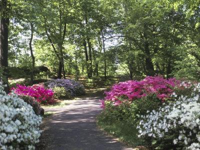 https://imgc.allpostersimages.com/img/posters/azalea-way-botanical-gardens-bronx-ny_u-L-PXYS0I0.jpg?p=0