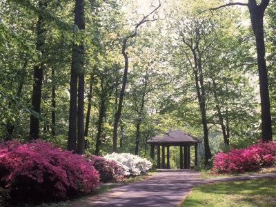 https://imgc.allpostersimages.com/img/posters/azalea-way-botanical-gardens-bronx-ny_u-L-PXYSP50.jpg?p=0