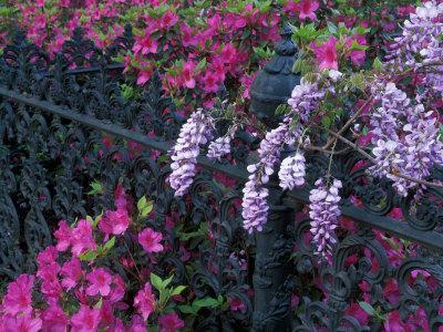 https://imgc.allpostersimages.com/img/posters/azaleas-and-wisteria-bloom-at-bonaventure-cemetery-savannah-georgia-usa_u-L-PXPRNR0.jpg?p=0
