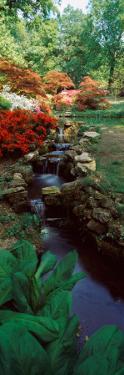 Azaleas in a Garden, Exbury Gardens, New Forest, Hampshire, England