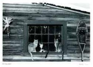 Untitled - Cats in Window by B. A. King